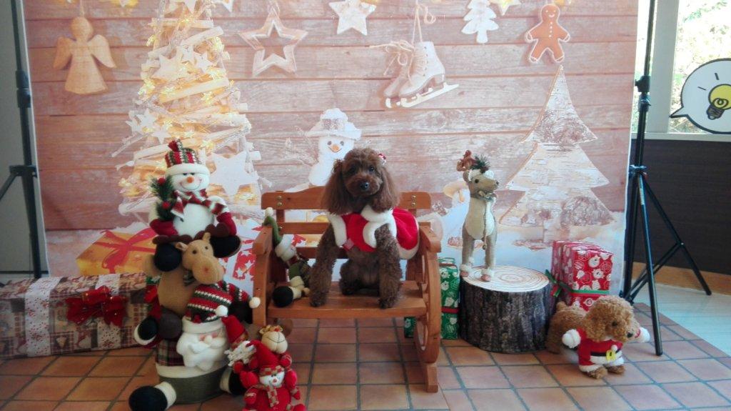 愛犬お宿のクリスマス仕様のフォトスポット