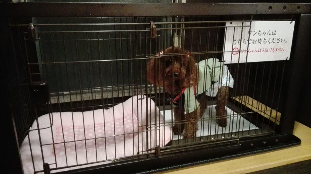 愛犬お宿の貸切り温泉内風呂脱衣所に置かれたケージ