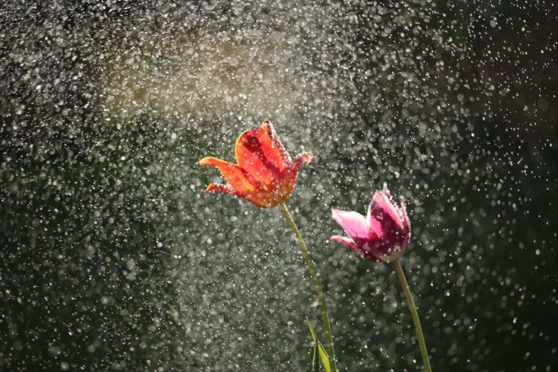 花がシャワーのように水を浴びているところ