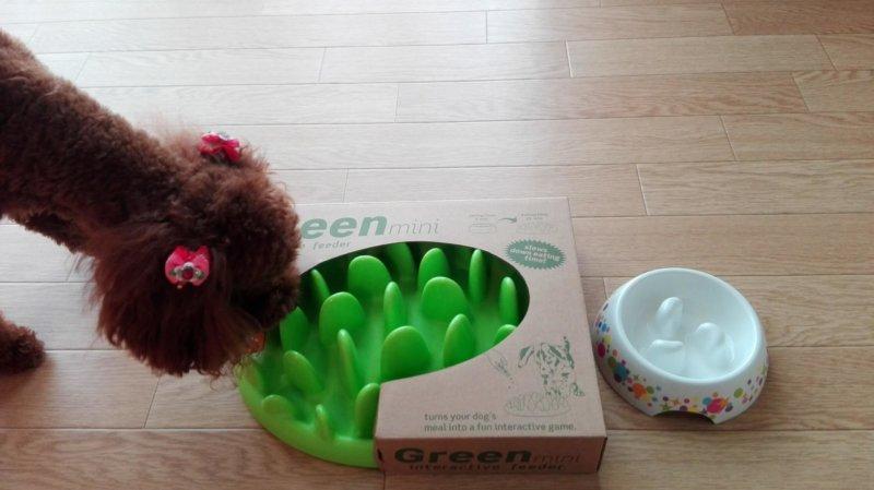 届いた早食い防止皿に興味津々の愛犬