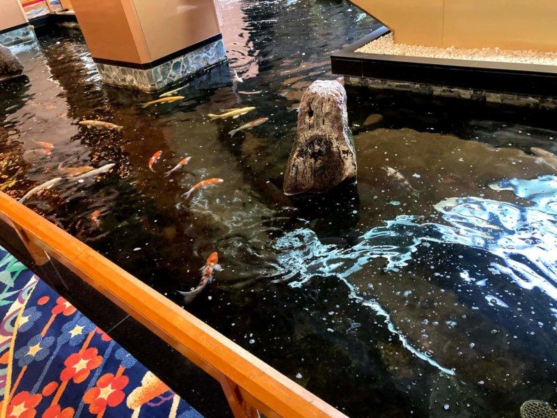 ホテル瑞鳳館内の池の鯉