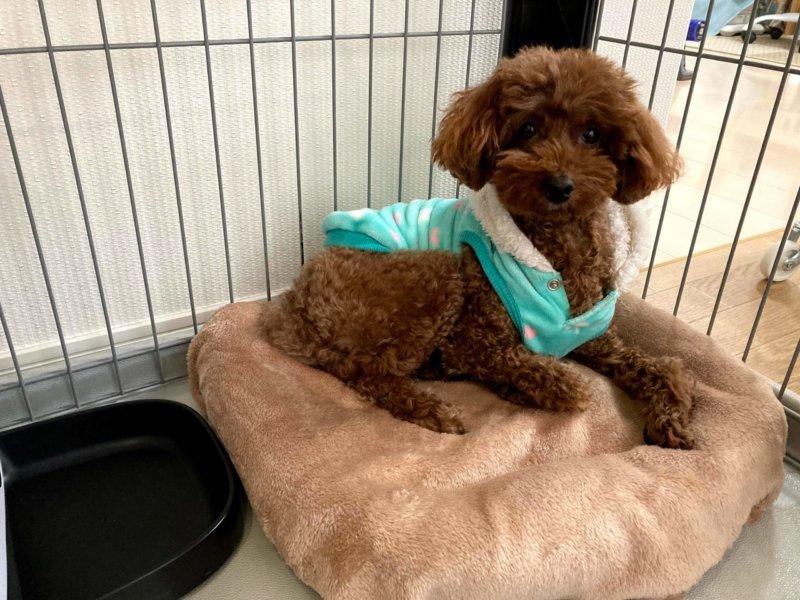 ゆたぽんをセットしたベッドに乗る犬