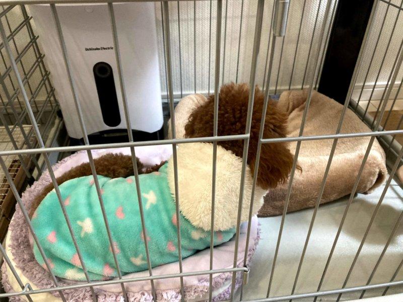 ゆたぽんを嫌がり他のクッションで寝る犬