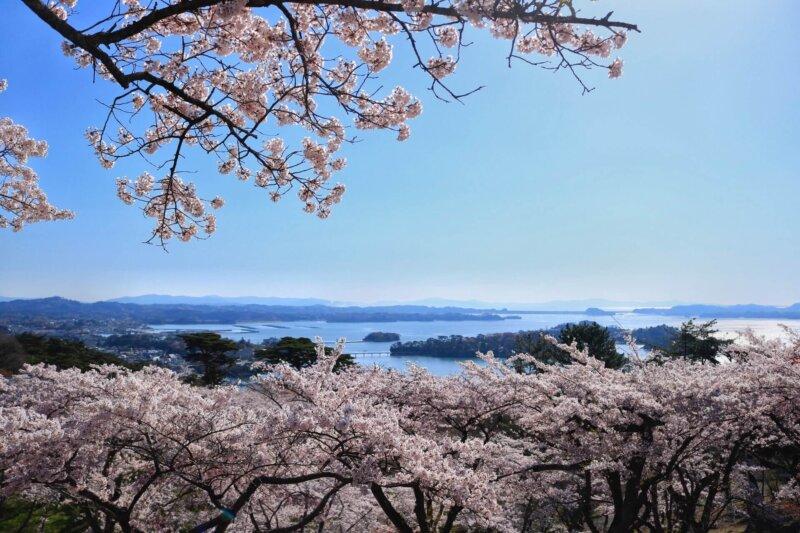 「西行戻しの松公園」桜の季節の絶景